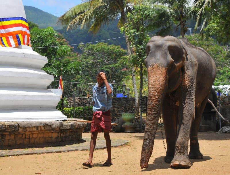 Elefante - templo da relíquia do dente de Kandy (Sri Lanka) imagem de stock royalty free