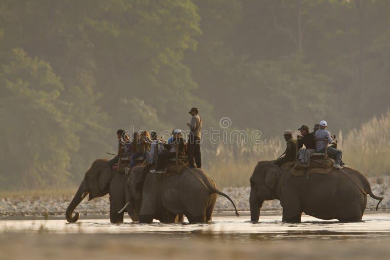 Elefante três doméstico no safari de selva em Nepal fotografia de stock royalty free