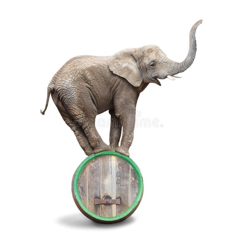 Elefante ubriaco immagine stock libera da diritti