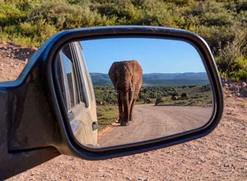 Elefante in uno specchio fotografie stock