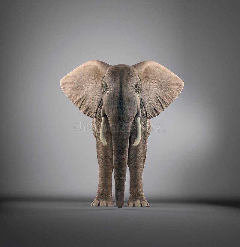 Elefante in uno studio illustrazione vettoriale