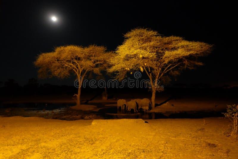 Elefante a waterhole al safari di Senyati alla notte immagine stock libera da diritti