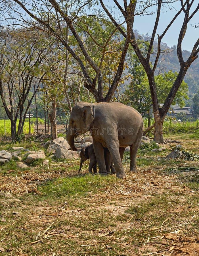Elefante y su niño fotografía de archivo