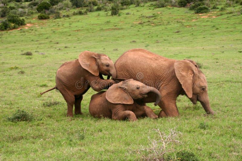 Elefanten behandla som ett barn arkivbild
