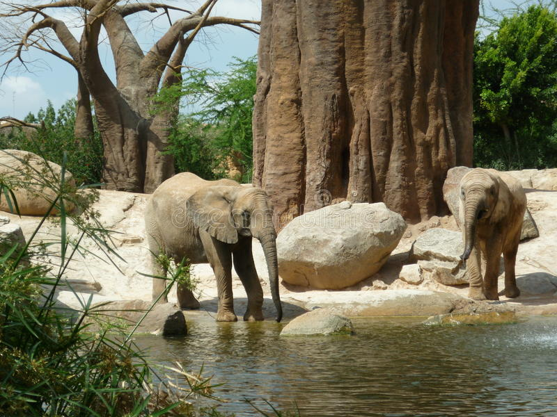 Elefanten biopark Valencia Spanien lizenzfreie stockbilder