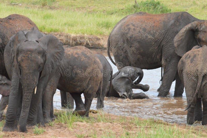 Elefanten, die im Wasser spielen lizenzfreie stockfotografie