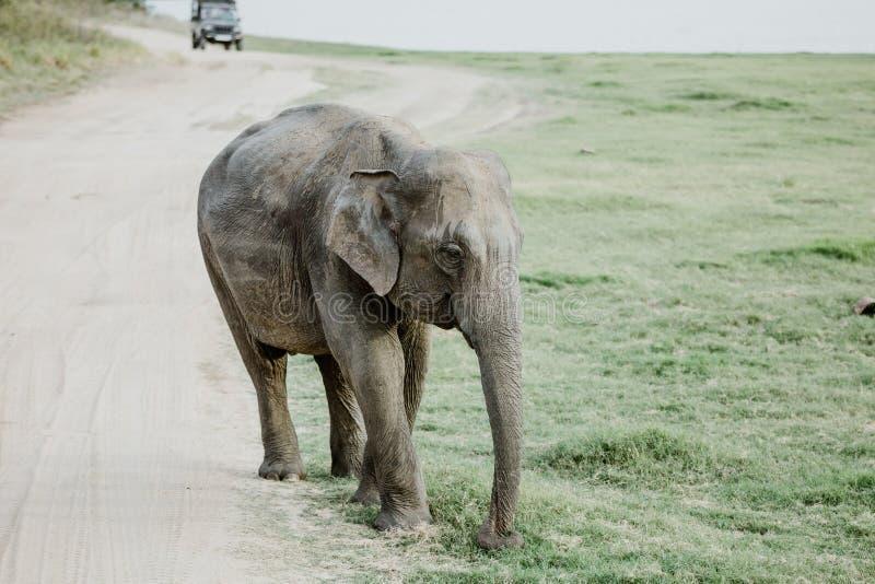 Elefanten in einem Nationalpark von Sri Lanka lizenzfreie stockbilder