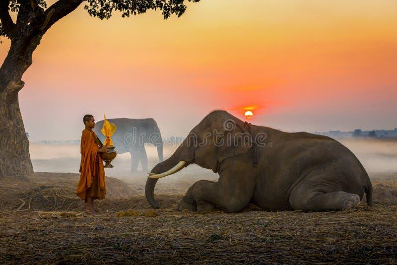 Elefanten gjorde merit till en munks skål Det thailändska folket och elefanten ger tillsammans munk elefant och Monk i skogsvinta royaltyfri fotografi