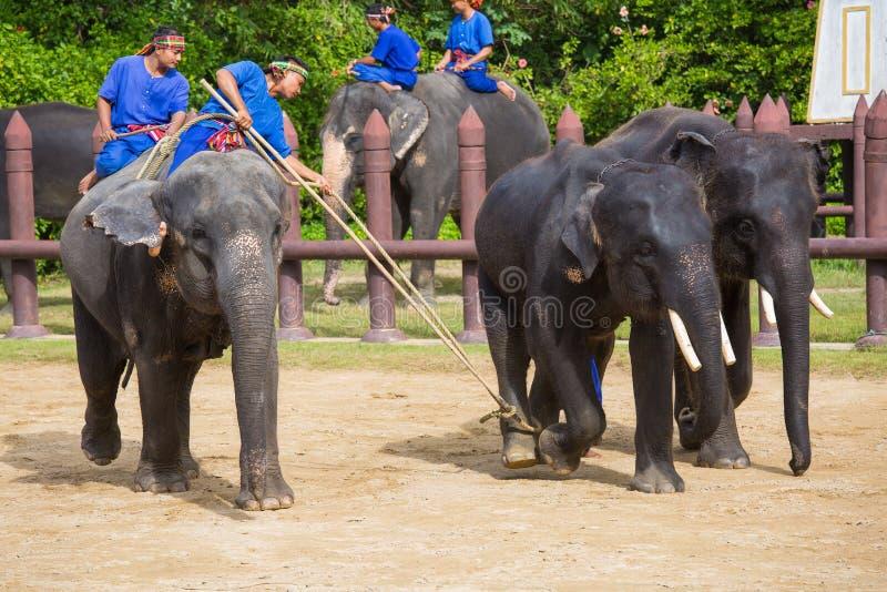 Elefanten i den forntida traditionen. fotografering för bildbyråer