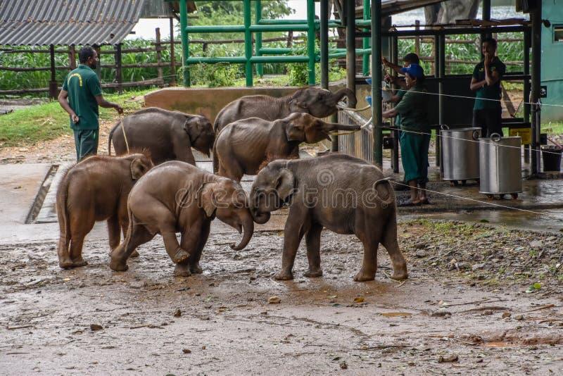 Elefanten im Nationalpark Udawalawe auf Sri Lanka lizenzfreies stockbild