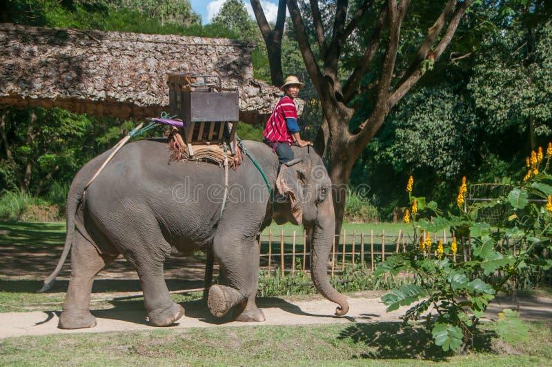 Elefanten med mannen går förbi fotografering för bildbyråer