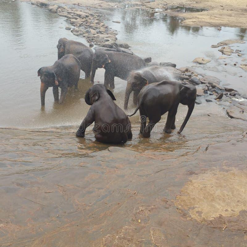elefanten lizenzfreie stockfotos
