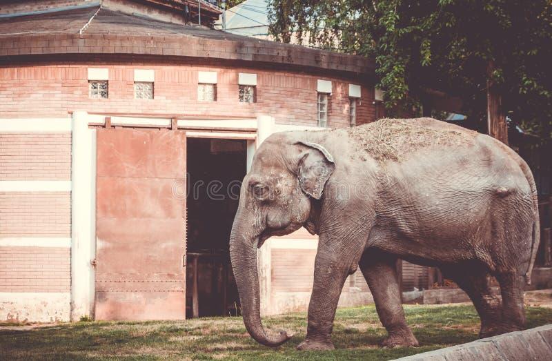 Elefanten som går i buren arkivbild