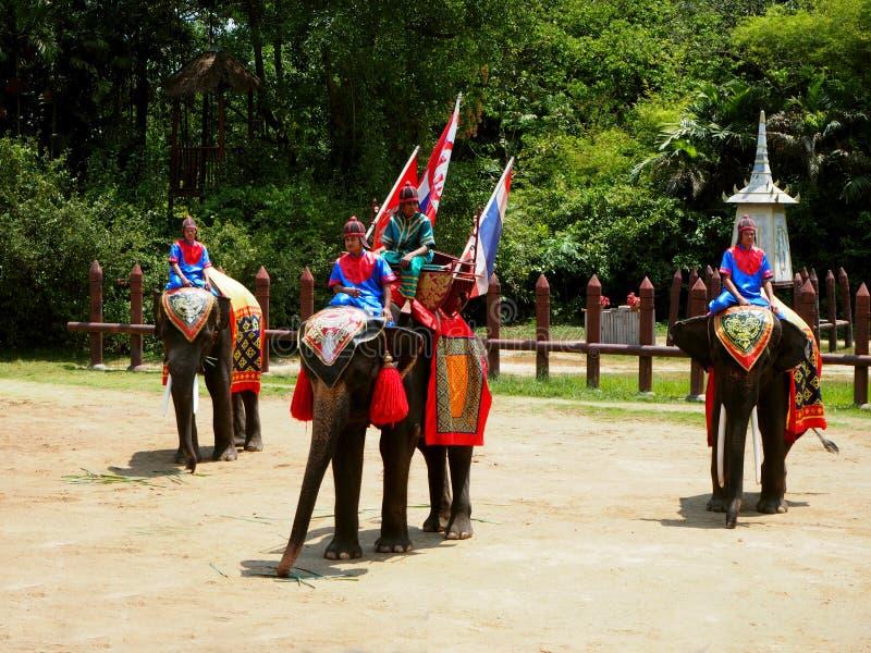 Elefanten und thailändische Krieger, die eine Show durchführen stockfotografie
