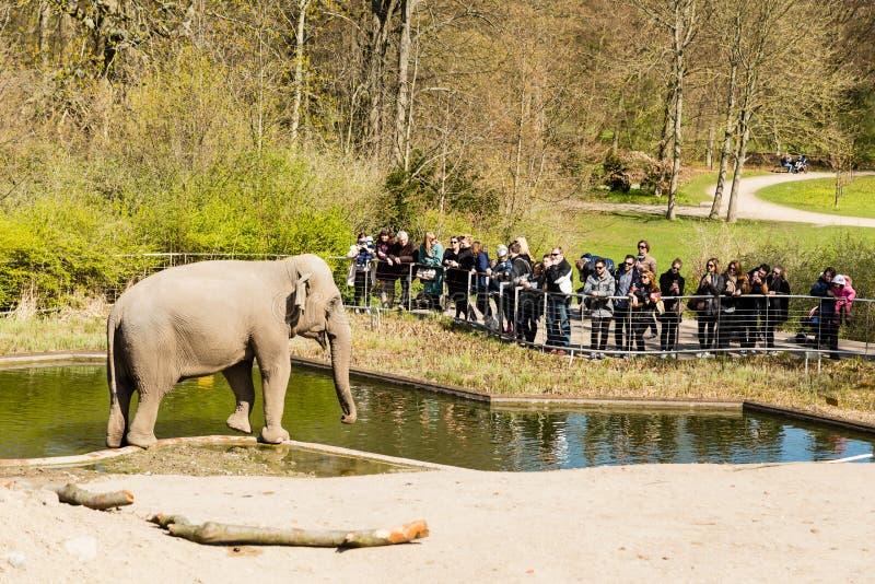 Elefanten in zoologischem Garten Kopenhagens stockbilder