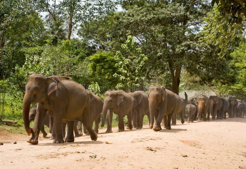 Download Elefanter arkivfoto. Bild av lane, solsken, sikt, tropiskt - 19790794