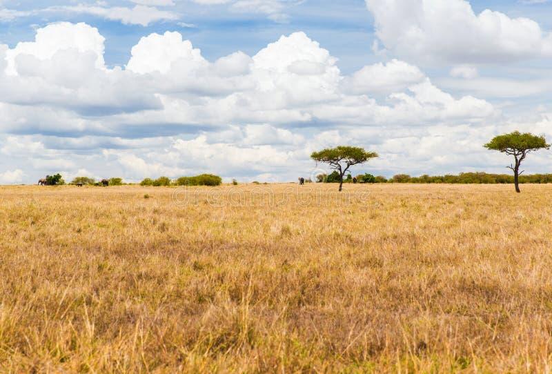Elefanter i savannah på africa arkivfoton