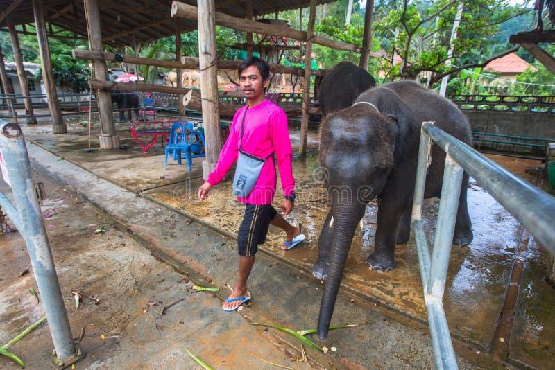 Elefanter på ön Från utveckling för lantgårddjur av turismbranschen grunda nuförtiden ett nytt bruk för elefanter i Thailand arkivbild