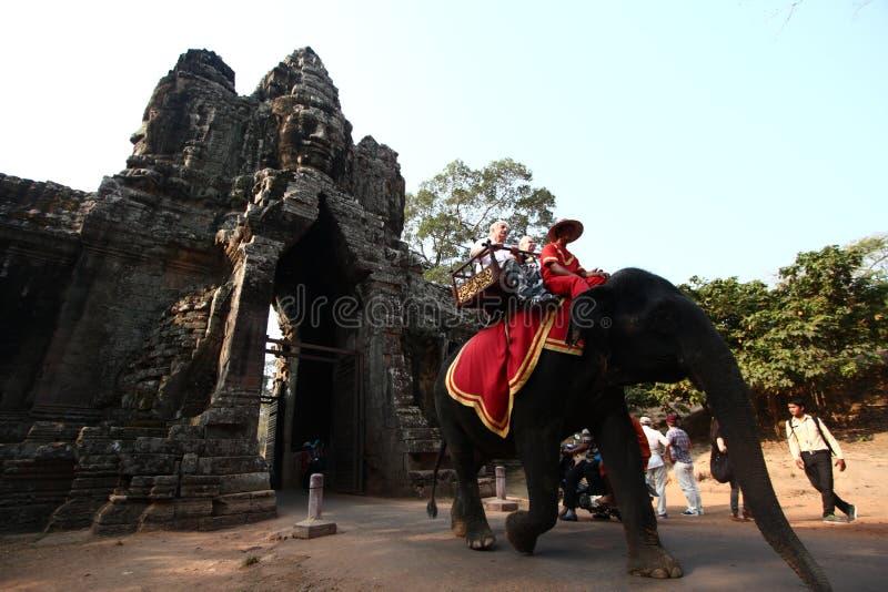 Elefanter på Angkor Wat royaltyfria foton