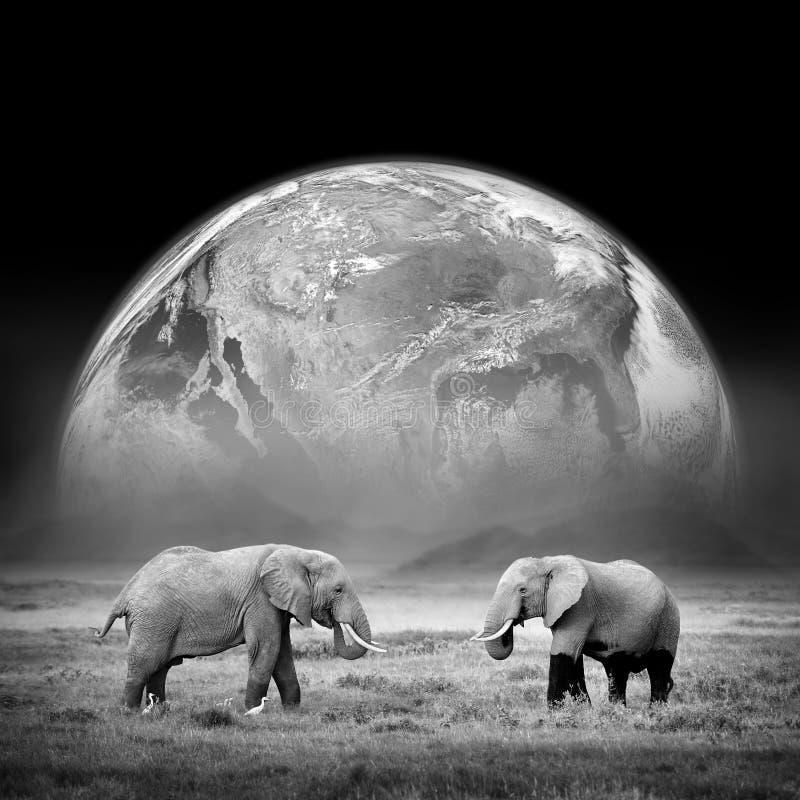 Elefanter på bakgrunden av jorden arkivbilder