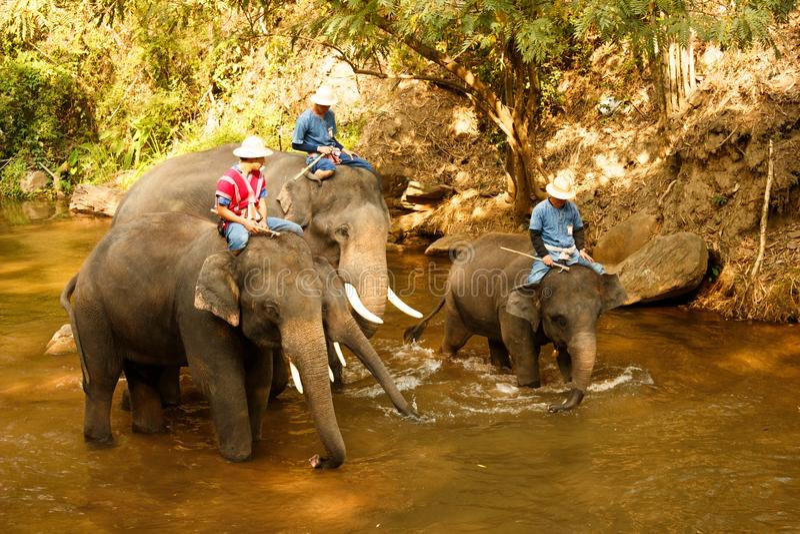 Elefanter som badar i floden - Thailand-4 royaltyfria foton