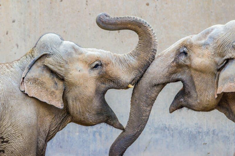 elefanter två arkivfoto