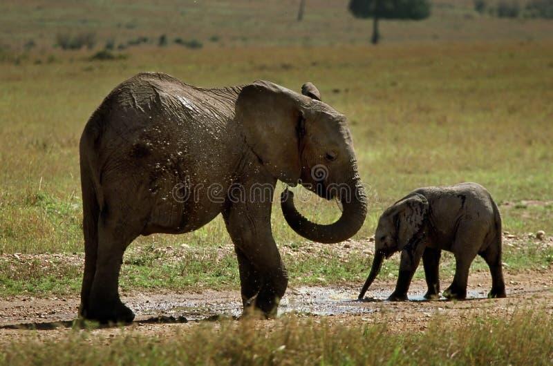 elefanter två barn royaltyfria foton