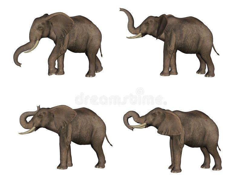 Elefantes ilustração royalty free
