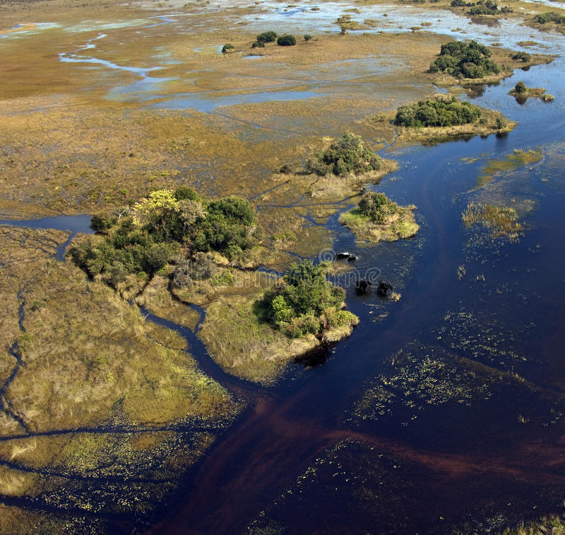 Elefantes africanos - delta de Okavango - Botswana fotos de archivo