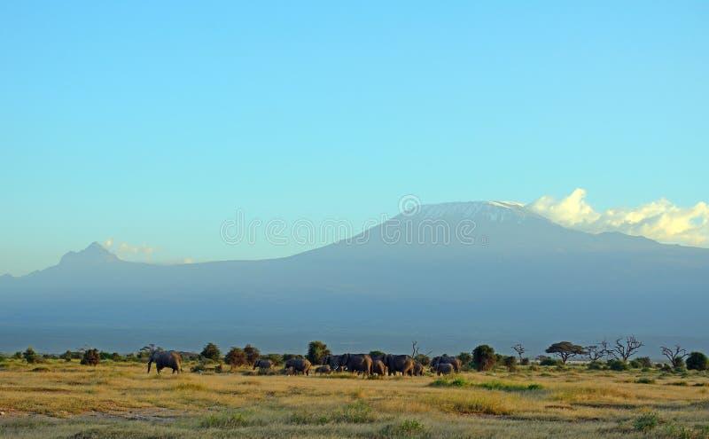 Elefantes africanos e o Kilimanjaro, parque nacional de Amboseli, K fotos de stock royalty free