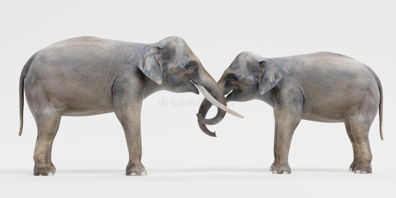 Elefantes asiáticos stock de ilustración