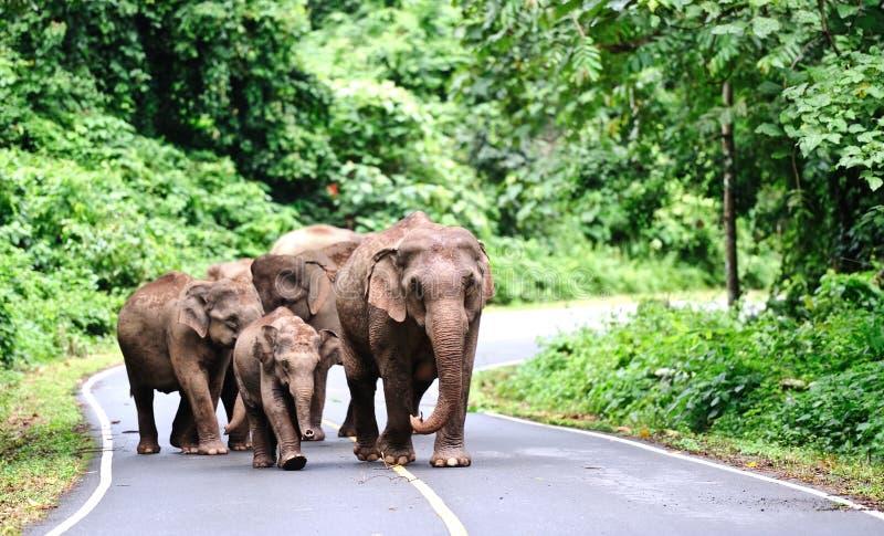 Download Família do elefante imagem de stock. Imagem de animal - 29829715
