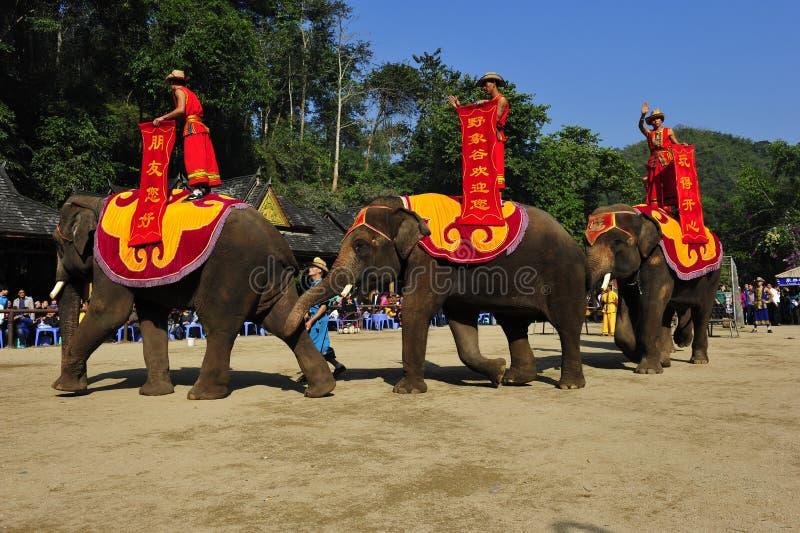 Elefantes como ¼ turístico China de Attractionï imagen de archivo libre de regalías
