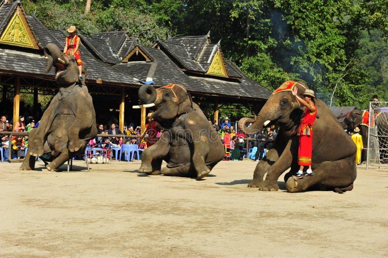 Elefantes como ¼ turístico China de Attractionï foto de archivo