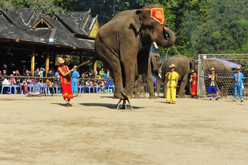 Elefantes como ¼ turístico China de Attractionï fotografía de archivo