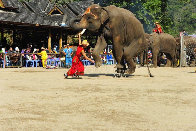 Elefantes como ¼ turístico China de Attractionï fotos de archivo