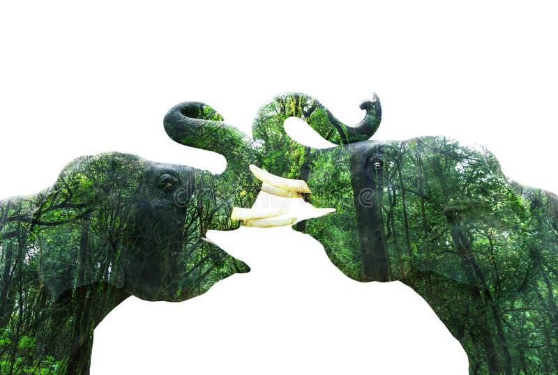 Elefantes da exposição dobro com floresta imagem de stock