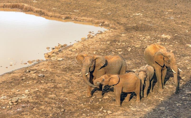 Elefantes da família imagem de stock