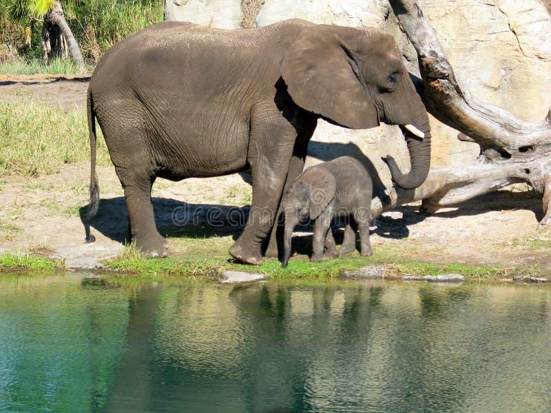 Elefantes da matriz e da filha fotografia de stock royalty free