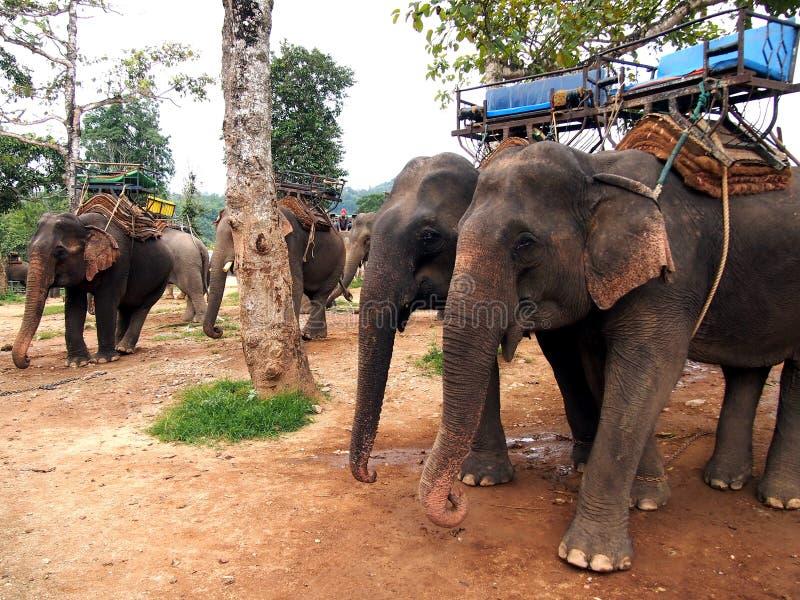 Elefantes de trabalho imagem de stock