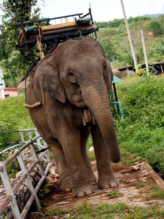 Elefantes de trabalho foto de stock royalty free