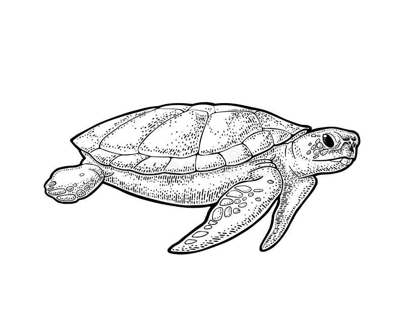 Elefantes e tartaruga que guardam a terra lisa Ilustração do preto do vintage da gravura ilustração royalty free