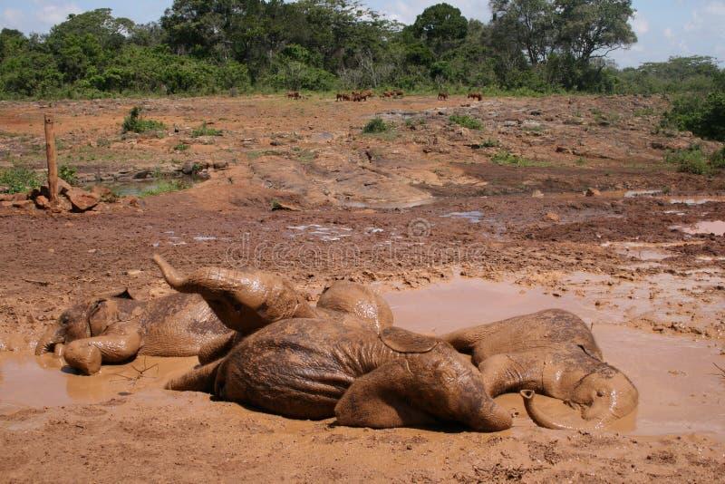 Elefantes el dormir foto de archivo