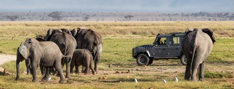 Elefantes em Amboseli com Safari Vehicle fotografia de stock royalty free