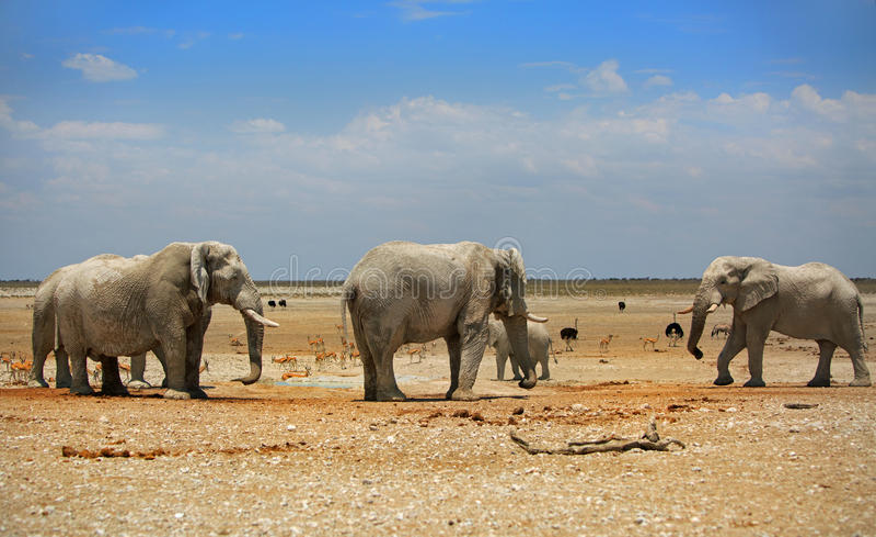 3 elefantes em Etosha com um céu azul brilhante imagens de stock