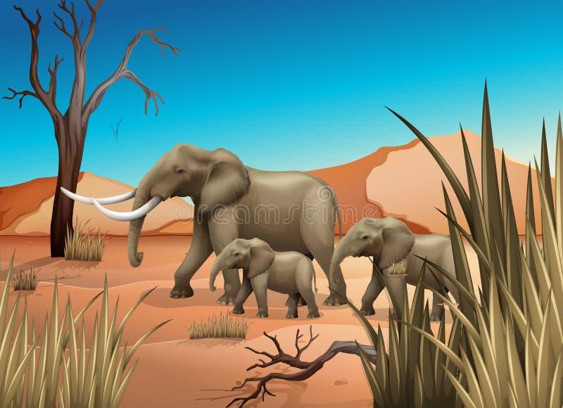Elefantes en el desierto libre illustration