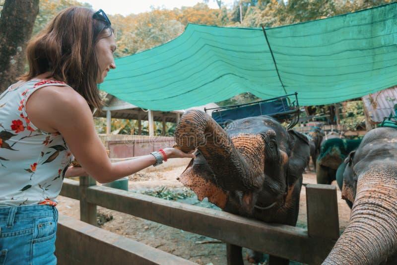 Elefantes en el parque zoológico foto de archivo libre de regalías