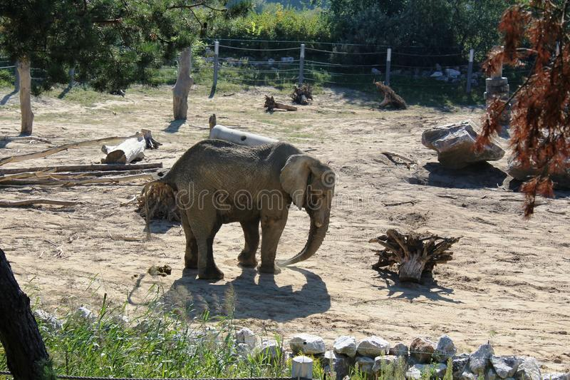 Elefantes en el PARQUE ZOOLÓGICO en Poznán, Polonia imágenes de archivo libres de regalías