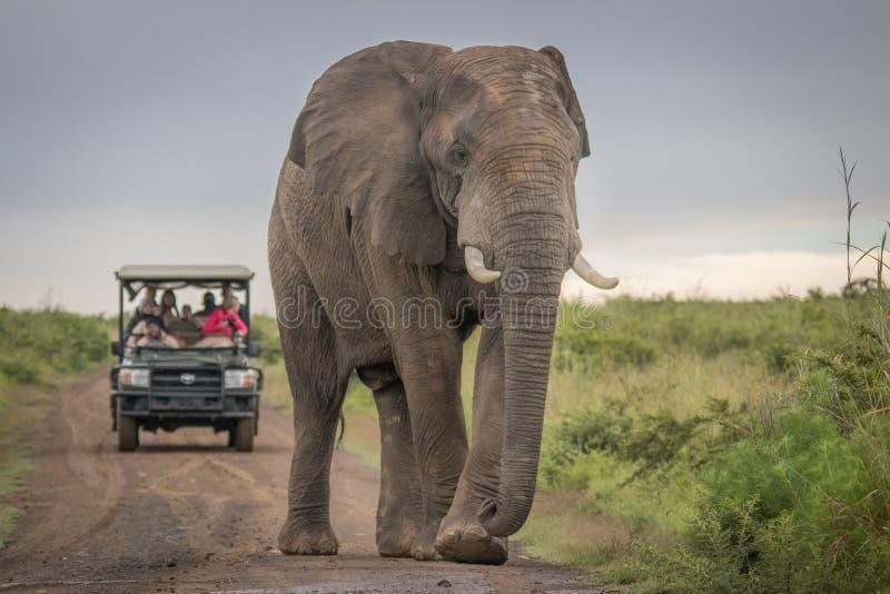 Elefantes en el salvaje en Kwazulu Natal foto de archivo libre de regalías