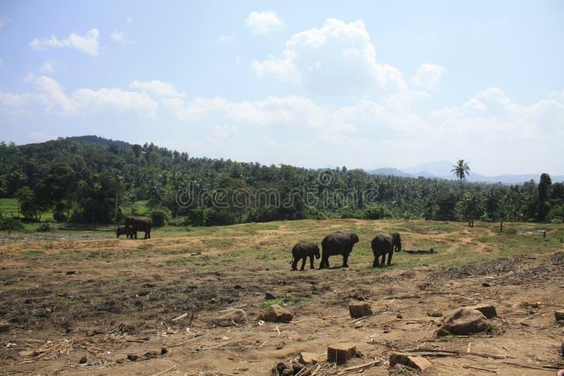 Elefantes en montañas foto de archivo
